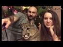 Пума Месси История нашего знакомства. Cougar Messi The story of our acquaintance.