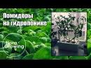 Выращивание помидоров на гидропонике с удобрением Hydroponics Kit