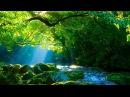 Música Relaxante Harpa e Natureza Sinta se no Paraíso Acalmar e Meditar