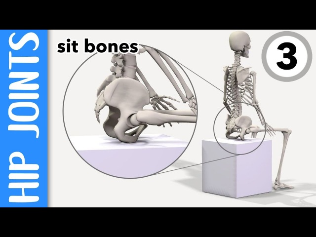 Where are your hip joints and sit-bones? EXPLAINED