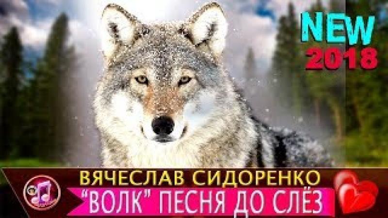 Волк - ОБАЛДЕННАЯ песня до слёз ❤️ Вячеслав Сидоренко 🎵