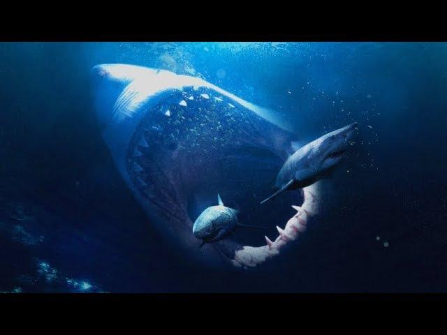 Мегалодон самая большая акула.Интересное видео 100%