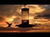 Faruk Sabanci ft Cami Awaken Zetan del Chillout Mix)