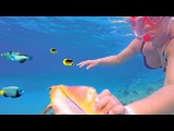 Egypt, Red sea. Girl &amp shell, corals &amp fish by hotel Hilton Hurghada 4K. Хургада, ныряем у отеля.
