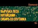 8 ᴴᴰ ВЫРУБКА ЛЕСОВ НЕЗАКОННАЯ ВЫРУБКА леса китайцами ВЫРУБКА ЛЕСА СО СПУТНИКА Domovoi YouTube