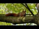 Дикая природа Германии Леса Тюрингии зеленое сердце