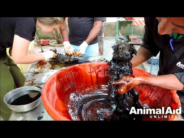 Служба спасения животных - Застывшие пленники/Animal Aid Unlimited- Stuck for hours