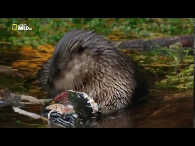 Национальные парки Америки 1 я серия Олимпик HD 720