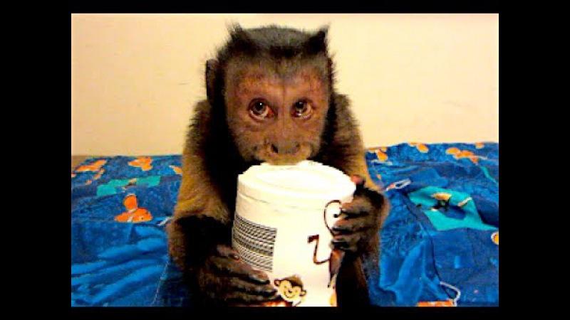 Monkey Says I LOVE Sweet Potato Puffs!
