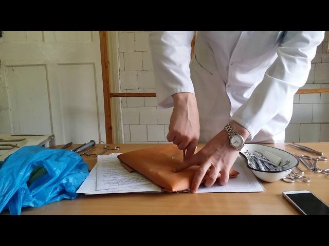 Топ. анатомия швы и хирургические инструменты часть 2