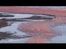 BBC Великий рифт Дикое сердце Африки 2 Вода Документальный природа животные 2010