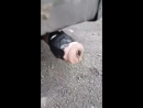Секс-игрушку нацепили на глушитель автомобиля » Триникси
