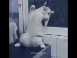 Танцующий котей