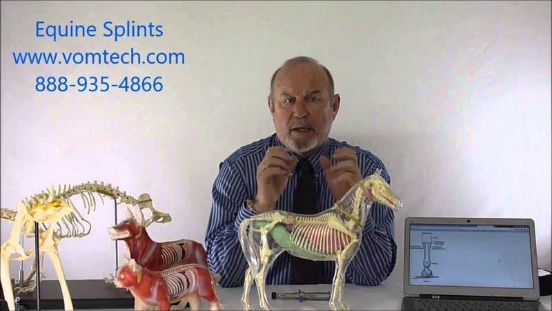 Сплинт и переломы костей запястья у лошадей (лазеротерапия) / Equine Splints and Splintbone Fracture
