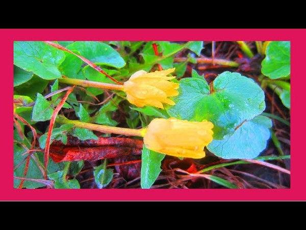Первые весенние цветы 🌺 🌸 Этот прекрасный мир!