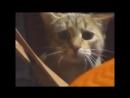 ежемесячные - жизнь кошачья