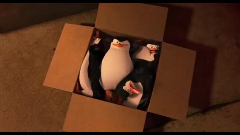Пингвины Мадагаскара момент смешной 1- The Pengui