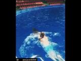 Плавание с дельфинами. Адлерский Дельфинарий