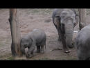 Слонёнок Зоопарк в Праге