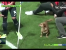 Эта собачка – главная звезда матча чемпионата Аргентины
