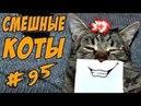 1025 Смешные кошки и коты 2018 ДО СЛЁЗ Приколы с котами и кошками Funny Cats compilation