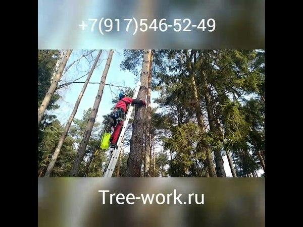 Обработка деревьев от короеда. Борьба с короедом. Защита деревьев. www.tree-work.ru