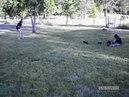 Случайные кадры нападения стаи хищников на человека