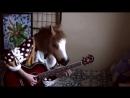 Кино В Цой Апрель│Fingerstyle guitar solo cover│ 720 X 1280 mp4