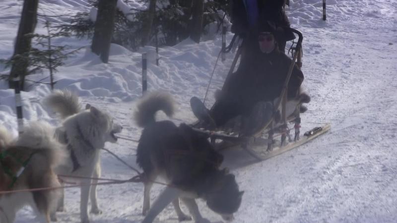 Гера едет на нартах которые везут собаки, которыми управляет его знакомая