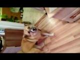 Собака  реагирует на сигнал ДПС
