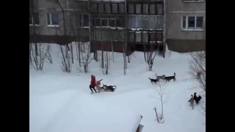 Дворник с лопатой спасает девушку от собак
