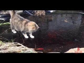 как кот ловит рыбу из пруда. how a cat catches fish from a pond