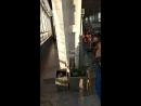 Москва_Белорусский Жд вокзал