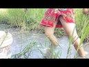Cô gái xinh đẹp đi bắt cá - Cuộc sống quê tôi 28 | Beautiful girl to catch fish - Life in my country