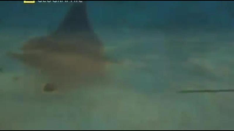 Морские монстры. Доисторические чудовища глубин океана. Документальный фильм