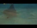 Морские монстры Доисторические чудовища глубин океана Документальный фильм