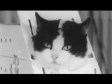 Во Франции начали сбор денег на памятник первой кошке-космонавту