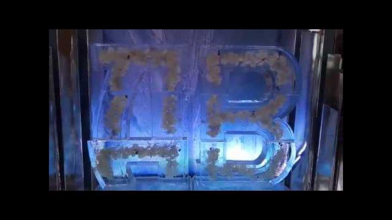 Ледяные инициалы в Ресторане Вилла Ротонда, Одинцово от www.maryice.ru
