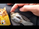 Freezing Bird Trapped on Car Roof Rescued by Perfect Guy The Dodo
