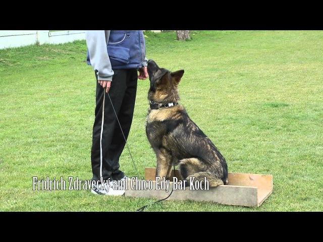 Dog Obedience Training - Positive Methods / K9 Ambassador