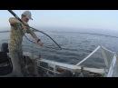 Рыбалка на сома с квоком