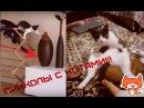 ПРИКОЛЫ С КОТАМИ И КОШКАМИ Подборка смешных и интересных видео с котиками и кош...