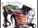 Как научиться отжиматься на брусьях, как накачать трицепс, а как грудь на них?