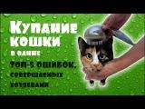 КУПАНИЕ КОШКИ в ванне ТОП-5 ошибок, совершаемых хозяевами + Лайфхак Как помыть кота