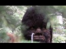 PhD's Astounded by Sasquatch videos and Proof of Bigfoot