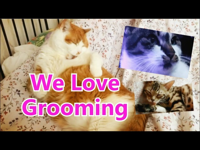 We Love Grooming I Animal Therapy I Cat I Kitten