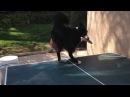 Ping pong - Dog vs Cat coub
