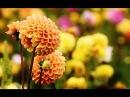 Удачные беседы формула цветника