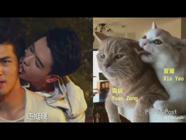 Advance Bravely(盛势) Biting (licking) his ear. Xia Yao is a cute kitty.