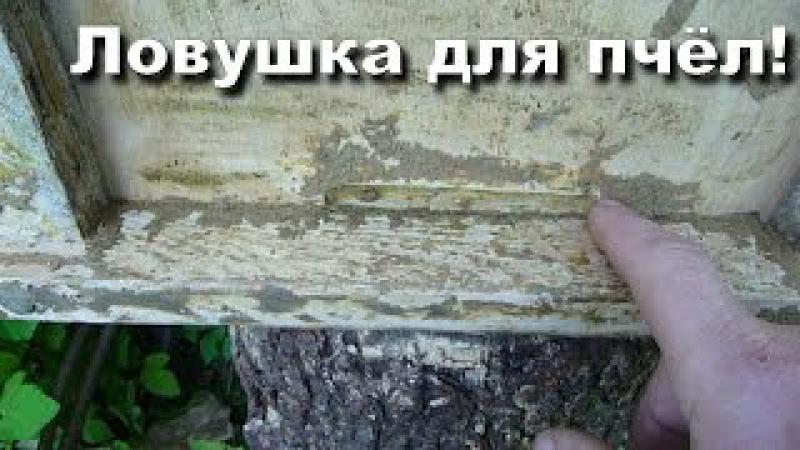 Ловушка для пчел Поимка пчелиных роев Пчеловодство с нуля